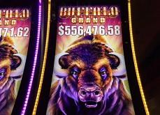 La machine à sous terrestre Buffalo Grand distribue 4 jackpots en 2 semaines pour 2.64$ millions de gains