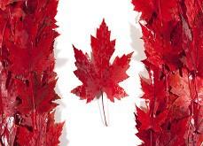 Quels sont les meilleurs casinos en ligne pour les joueurs canadiens ?