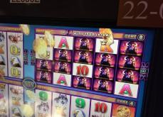 La machine à sous terrestre Buffalo, l'un des classiques des casinos de Vegas