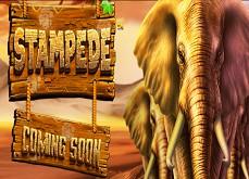 La machine à sous Stampede annoncée par Betsoft Gaming
